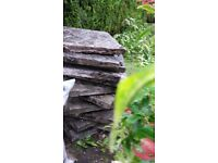 Garden/Building clearance