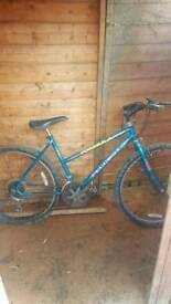 Selecting of mountain bikes starting from 40 pound
