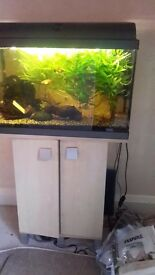 FISH TANK GUILDFORD