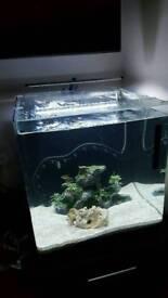 Aqua Nano 40 fish tank 55 litres plus fish and accessories