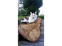 Missing cat - Riddlesden