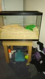 Female hamster with glass tank and food and ball