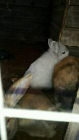 Various lovely bunnys
