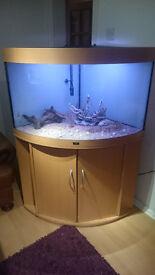 JUWEL TRIGON 190 LITER CORNER FISH TANK FOR SALE,FULL SET UP