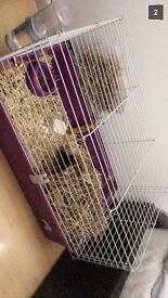 Purple guinea pig/rabbit cage for sale, in fab condition!