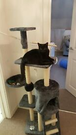 Milo & Misty Cat tree