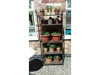 Wooden plant stand Inc 13 pots & plants