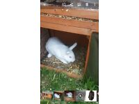 2 rabbits and hutch