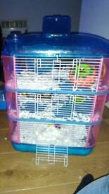 2 Hamster for sell