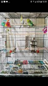 Large budgie cage - No budgies included