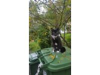 Missing 1 year old black and white cat teddy.