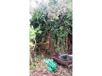 Bush Be Gone: Front and Back Garden Maintenance
