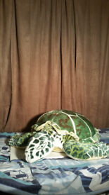TEDDY TURTLE (VELVET, GREEN WITH YELLOW STRIPES) LARGE. EXCELLENT CONDITION.