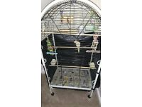 Cockatiels and parrot cage-full setup *REDUCED*