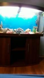 4ft vision bow front jewel aquarium