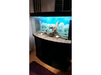 4 FT JUWEL VISION BOW FRONTED 260 LITER FISH TANK AND STAND FOR SALE,FULL SET UP