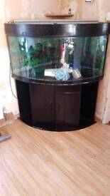 Large bow fishtank