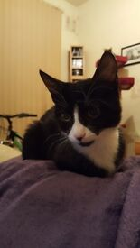 10mth old cat needs forever home.