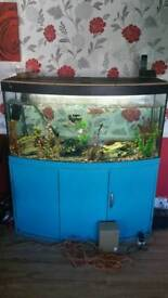 Fluval 180 Fish tank for sale