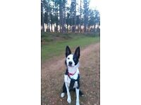 Wanted - a break in life, 1 bedroom property that will accept my lovely dog + some housing benefit