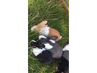 Baby female rabbits
