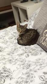 Beautiful 1 Year Old Kitten