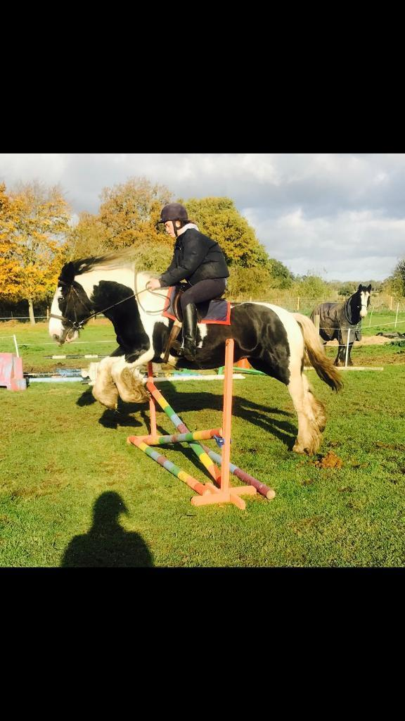 Cob mare 14.2 10 years first horse