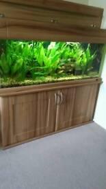 Fish tank 240litres. 4ft long
