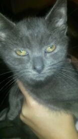 2 female and 2 black and 1 grey male kittens forsale