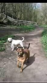 Hayleys doggy boarding