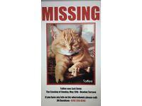 Ginger tom cat missing Charing Cross