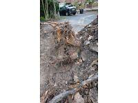 Tree stump needs cutting or taken away