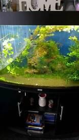 Juwel fish tank (SOLD)