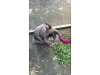 pair of rabbits looking for forever he