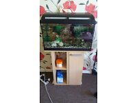Rectangle fish Tank Complete