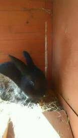 Rabbit and hatch and separate run