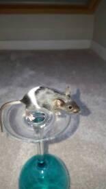 2 mice