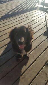 2 Dogs looking for new home