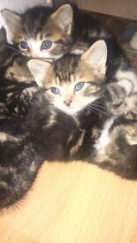 Boy kittens.