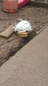 I am selling my baby rabbits.