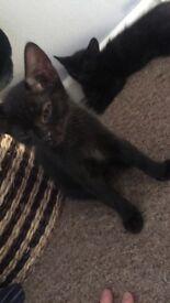 Male kitten 3 months old