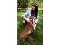 Dog walker - Stratford & Hackney - boarding, sitting & walking