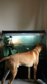 Turtle/fish 280L tank plus powerful external filter