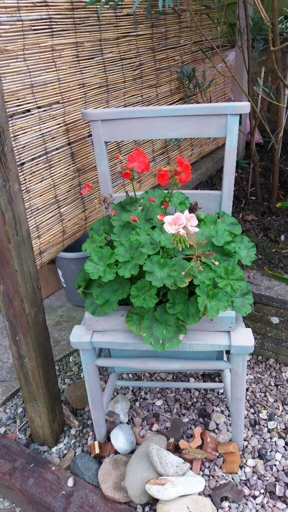Shabby chic Chair Garden Planterin Wirral, MerseysideGumtree - Shabby Chic Chair Flower Container Something different for your garden or patio. Includes the geranium plant. Shabby chic painted so meant to be quite abstract. Unusual item.... £15 for this one. Have another one in similar paint and plant at same...