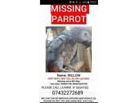 Lost african grey parrot,answers to willow.missing for 2 weeks dacyhume,urmston area