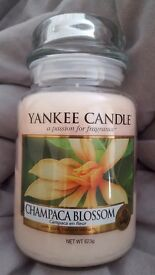 Large yankee candle champaca blossom