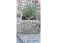 Stone planter with lavender plant
