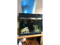 A lovely, Juwel 100 litre aquarium with black lid and framing.