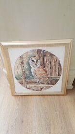 Framed Cross Stitch work of an Owl