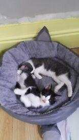 Lovelly Kittens 15weeks old